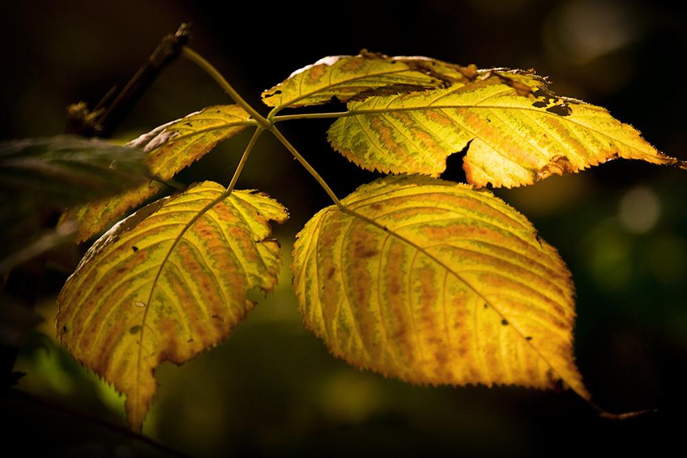 Herbstgold #2