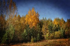 Herbstgold 2