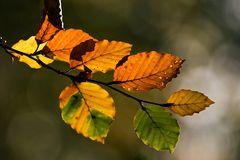 Herbstgold #4