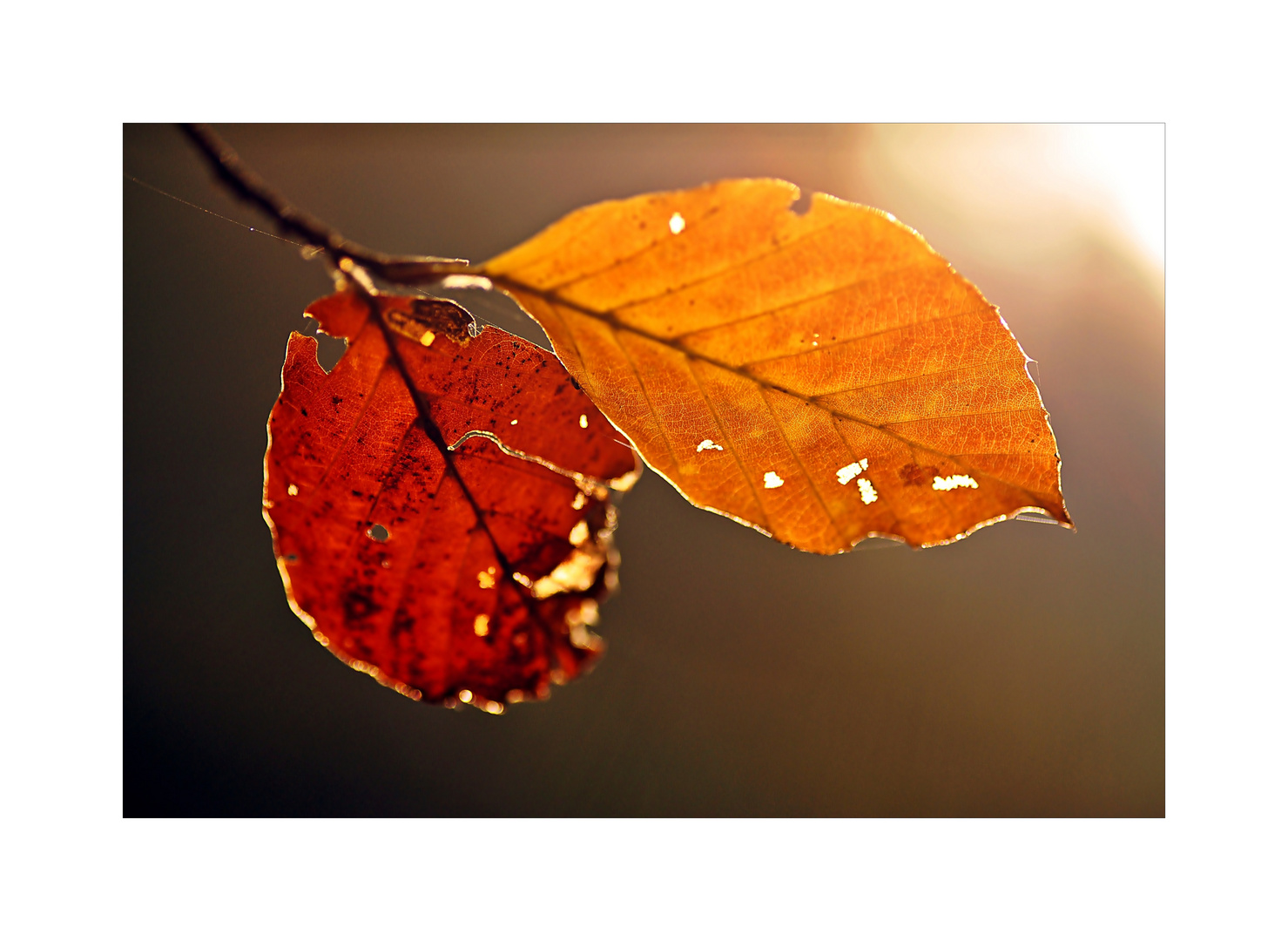 ~Herbstgold~