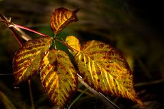 Herbstgold #5