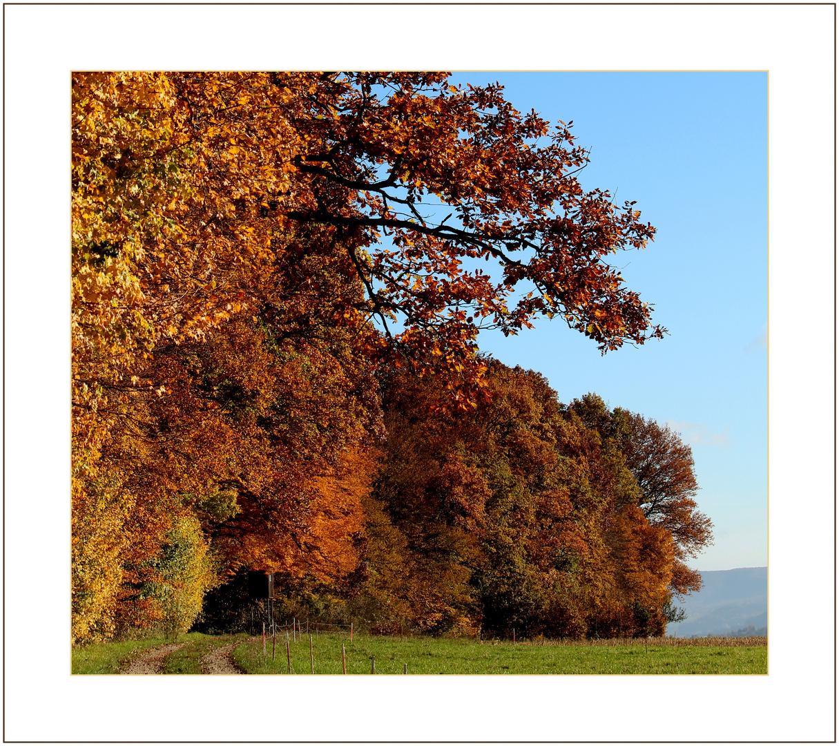 Herbstgold.