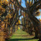 ... Herbstgold ...