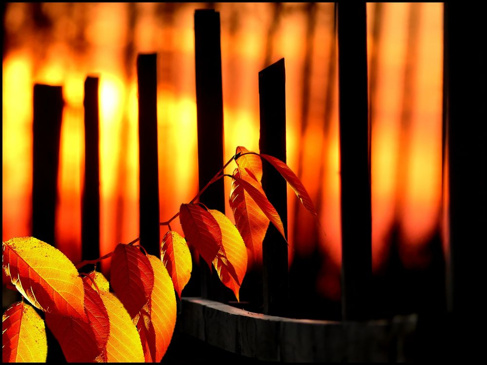 Herbst.Gold......