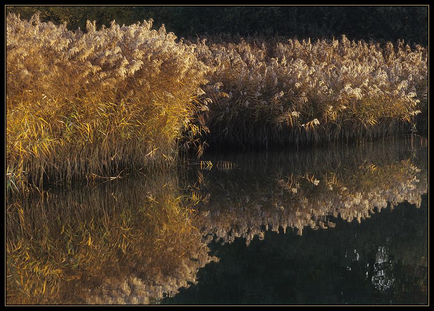 HerbstGold II