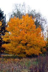Herbstgold macht glücklich, aber nicht reich