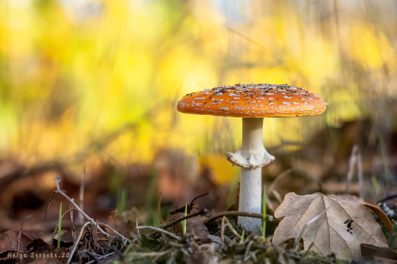 Herbstgrüße aus dem Erdreich#2