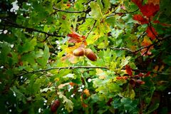 Herbstgrüße aus dem Kölner Königsforst