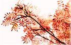 Herbstgruß II