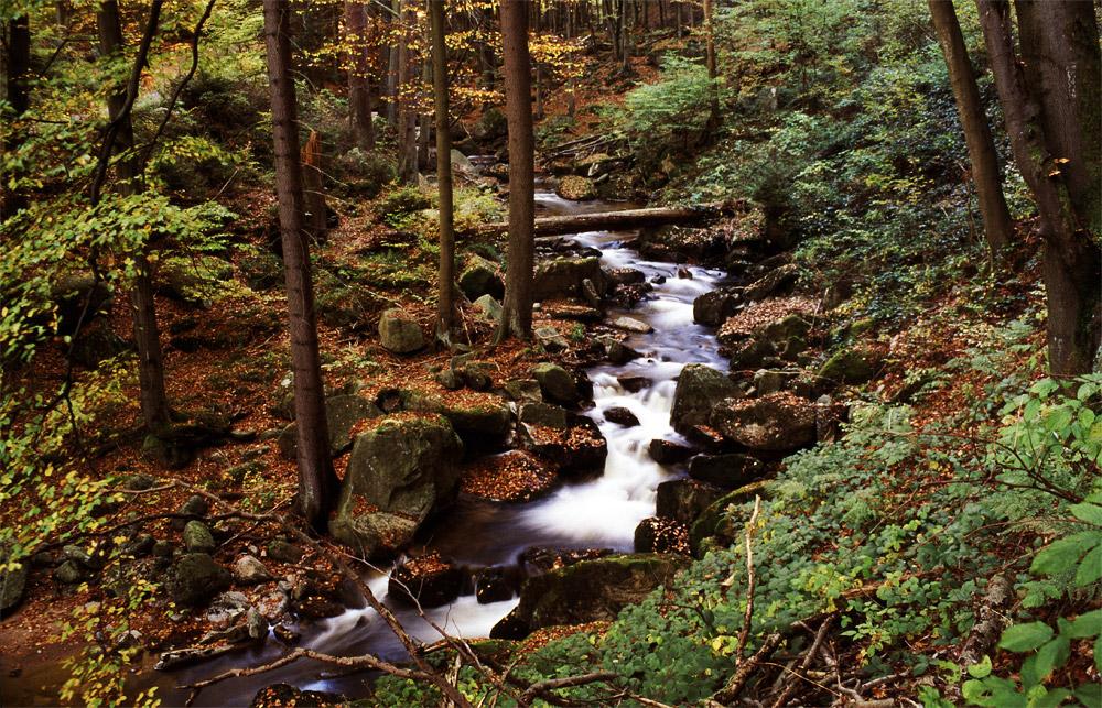 HerbstHarz 2007 III