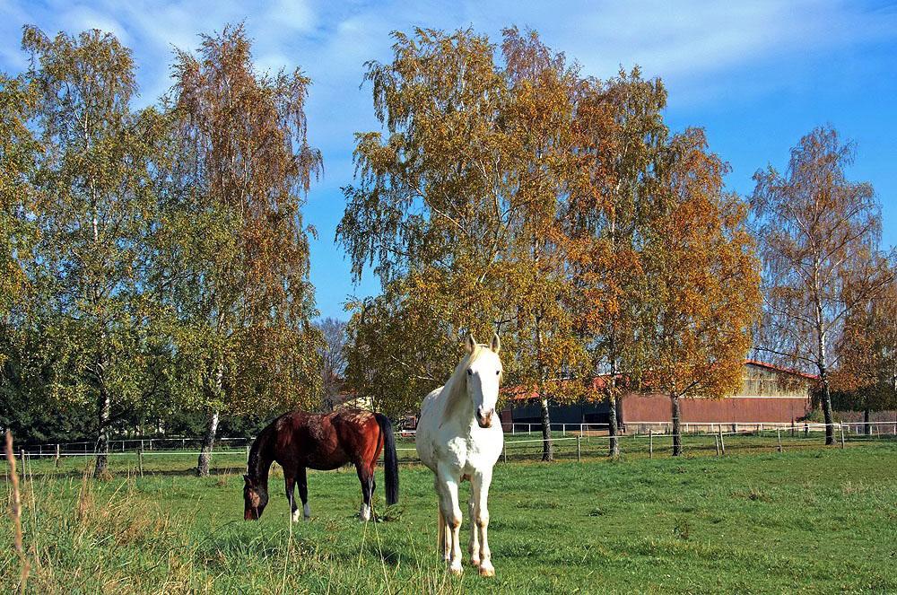Herbstheimat 39