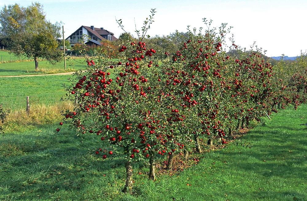 Herbstheimat 40
