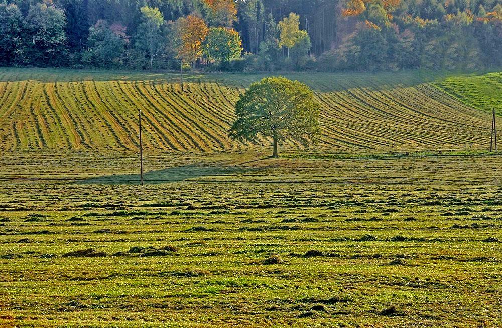 Herbstheimat 45