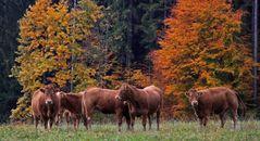 Herbstherde