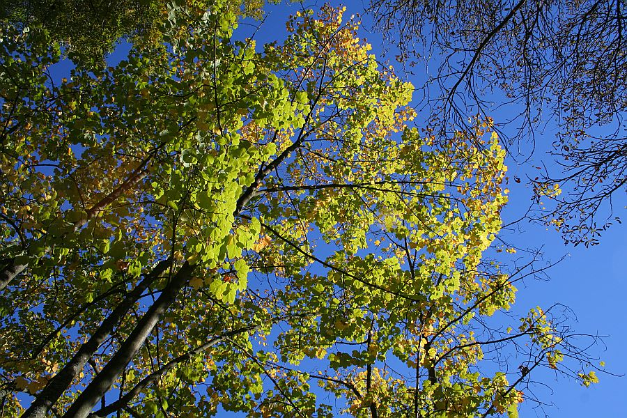 Herbsthimmel 1
