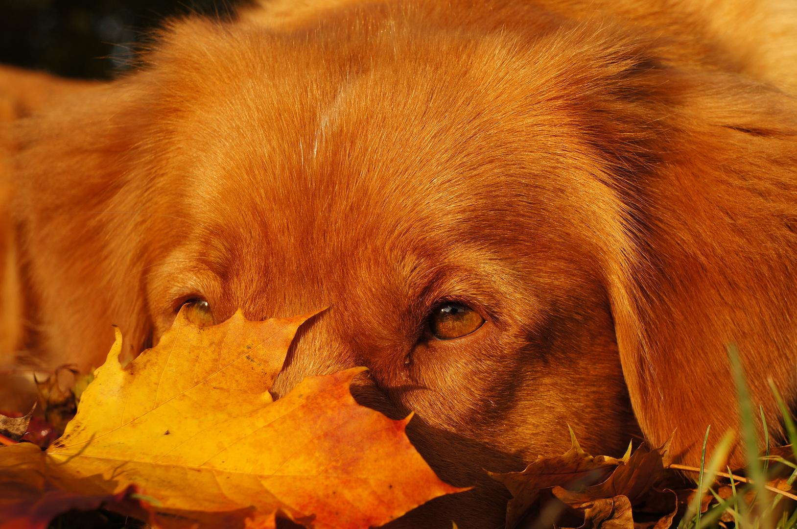Herbsthund