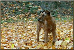 Herbsthund Stella