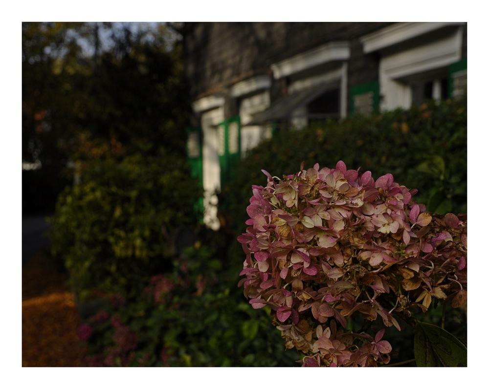 Herbstidyll am Wegesrand...