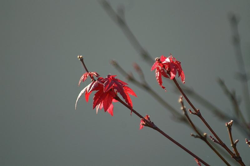 Herbstimpression 01