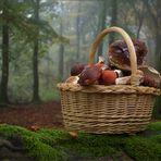 Herbstimpression (1)