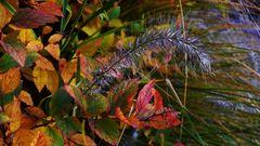 Herbstimpression (1) - Nachbearbeitet