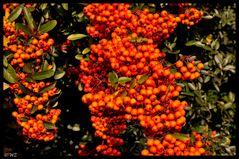 - Herbstimpression 2 -