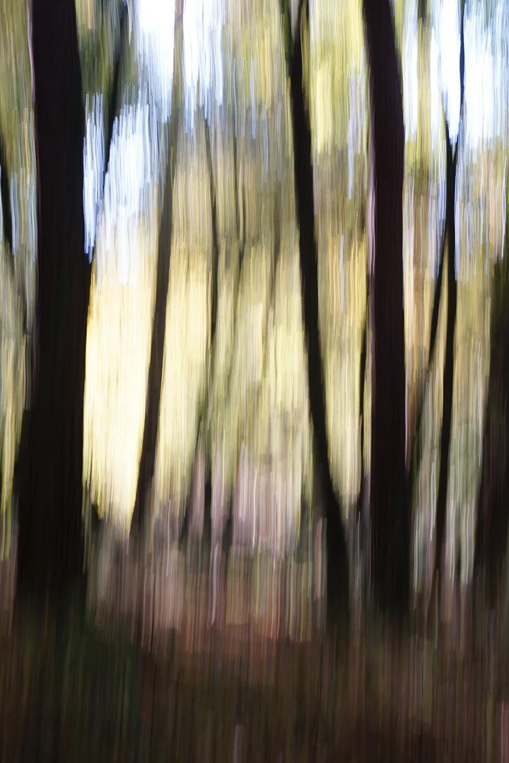 Herbstimpression - 2