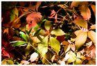 +++Herbstimpression+++