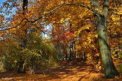 Herbstimpression ....