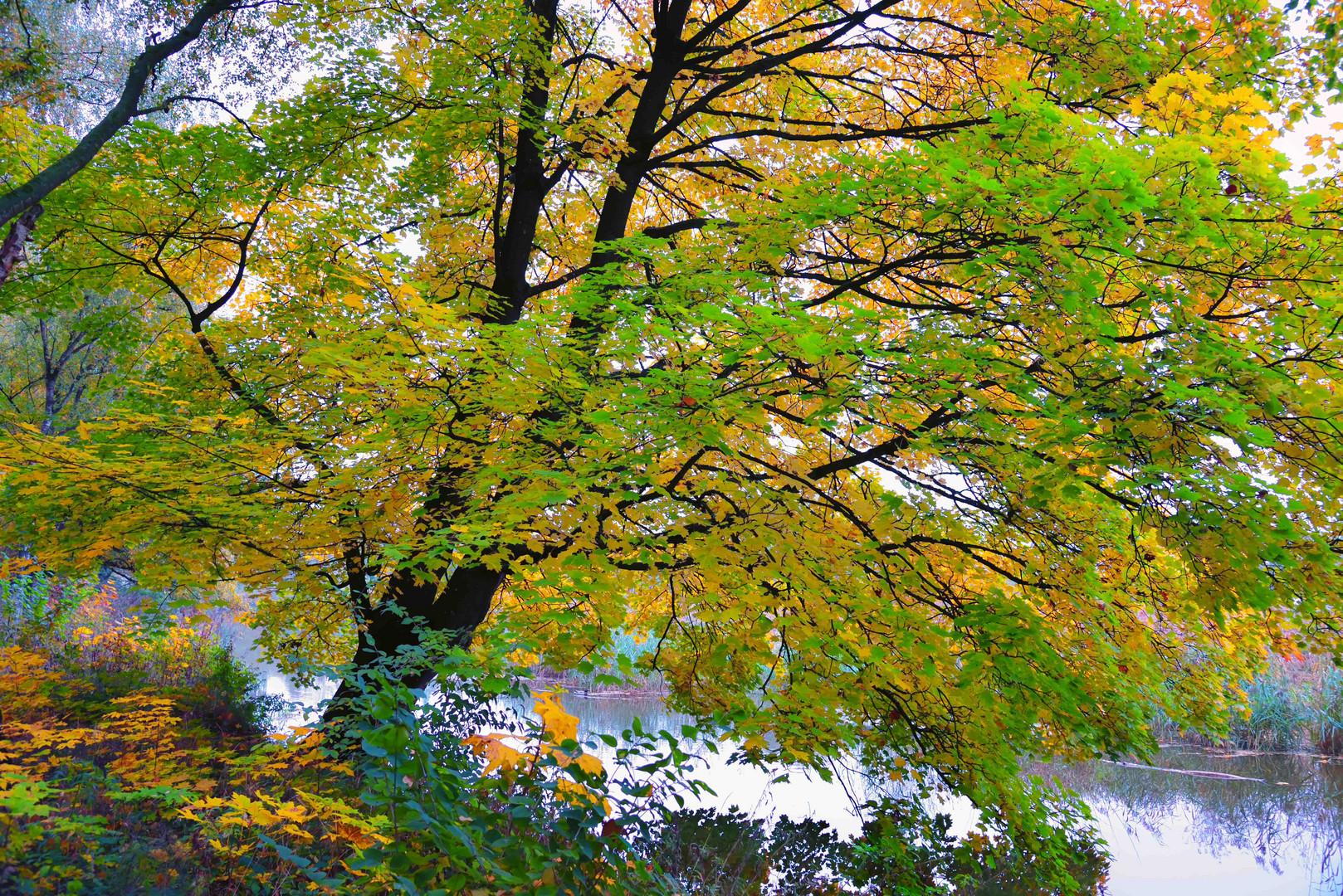 Herbstimpression an der Wörnitz