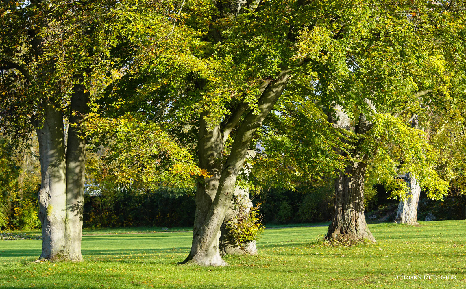 Herbstimpression im Park