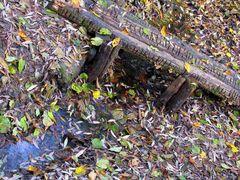 Herbstimpression mit kleiner Brücke