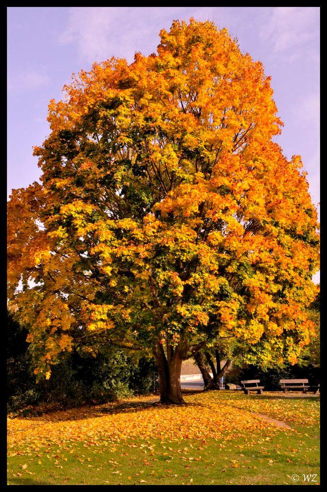- Herbstimpressionen 1 -