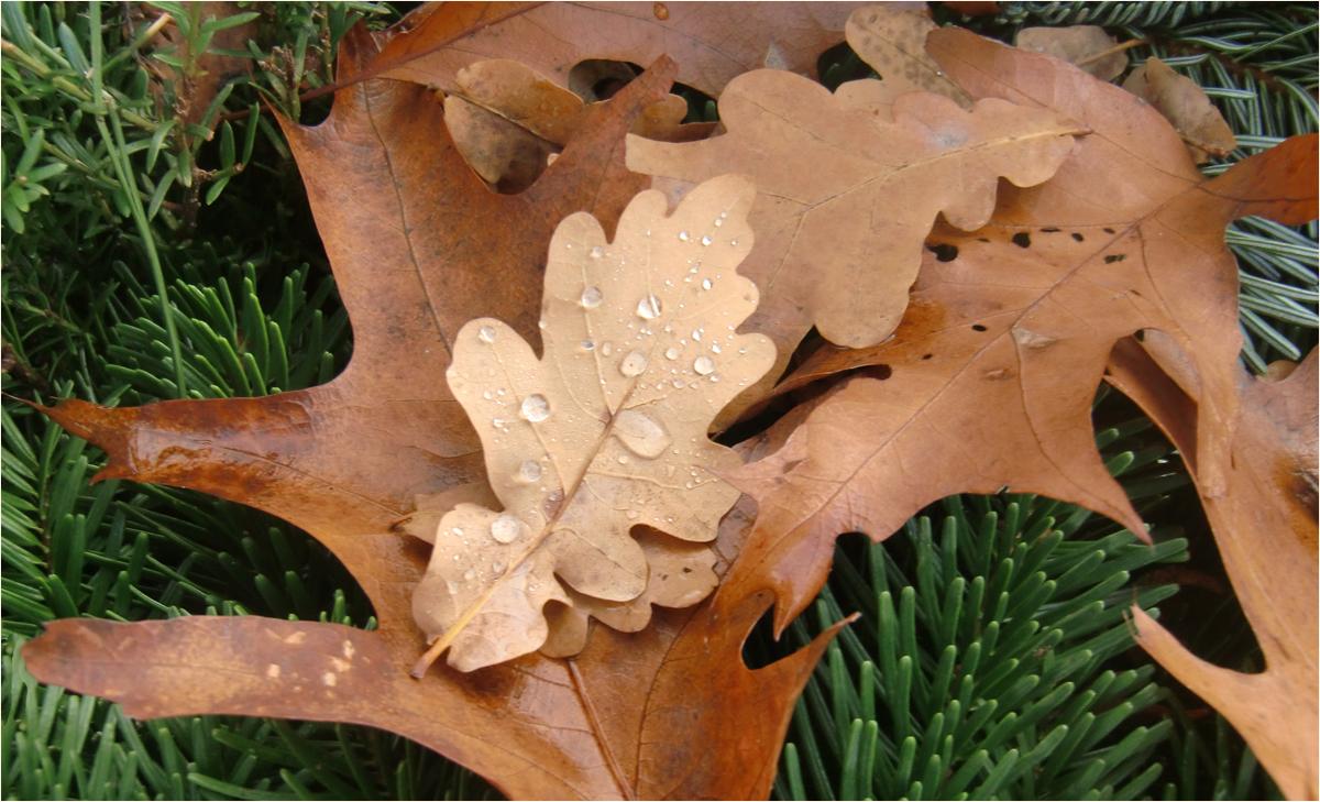 Herbstimpressionen (2)