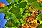 Herbstimpressionen (6)