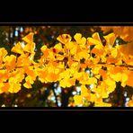 Herbstimpressionen 9