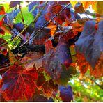 Herbstimpressionen-Farben und Formen