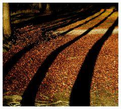 Herbstimpressionen gestreift