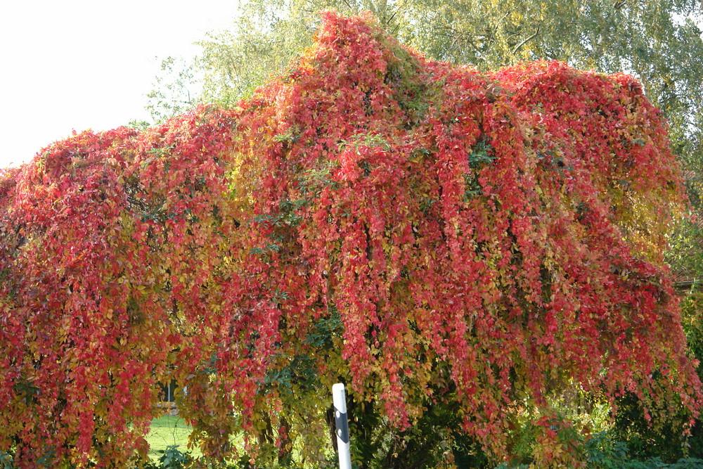Herbstimpressionen in Ostfriesland