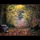 Herbstimpressionen-IV