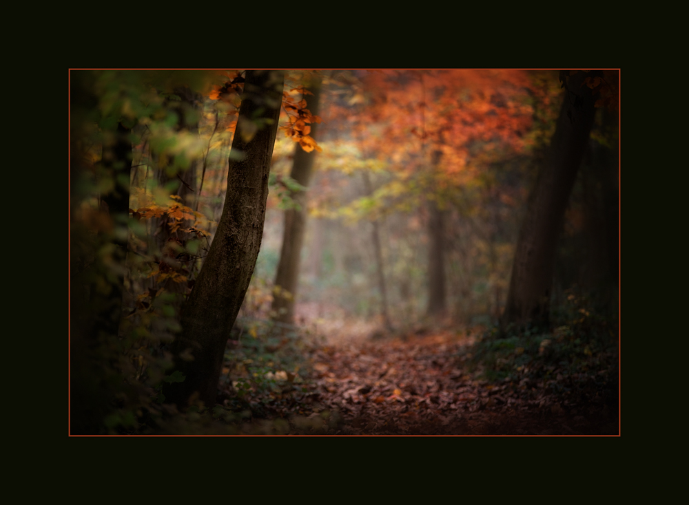 Herbstimpressionen-V