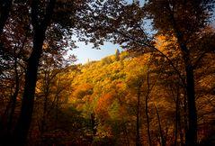 Herbstimpressionen_1