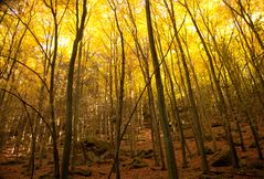 Herbstimpressionen_2