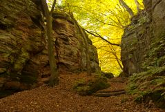 Herbstimpressionen_3
