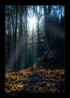 Herbstinpression