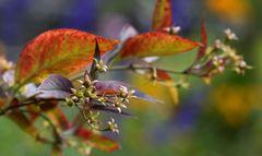 Herbstinpressionen