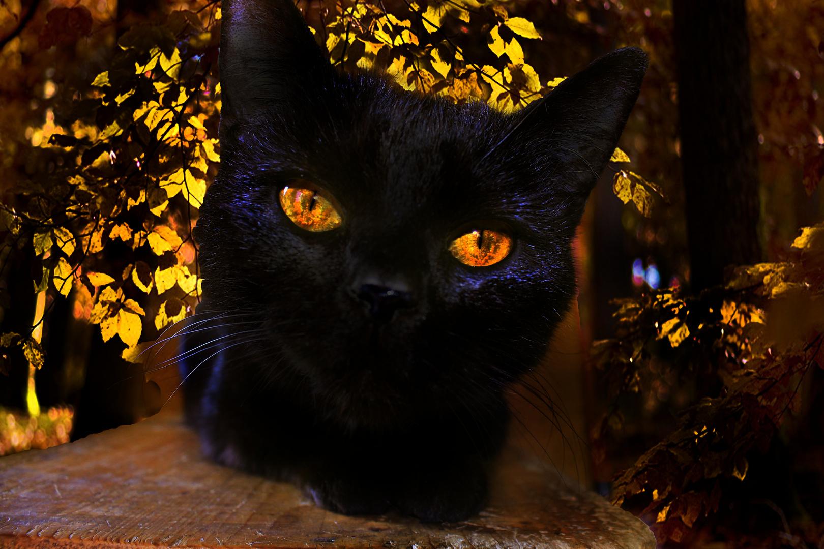 Herbstkätzchen :)