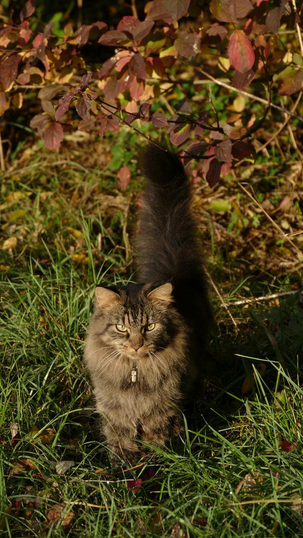 Herbstkatze Ronja