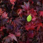 Herbstkontrast