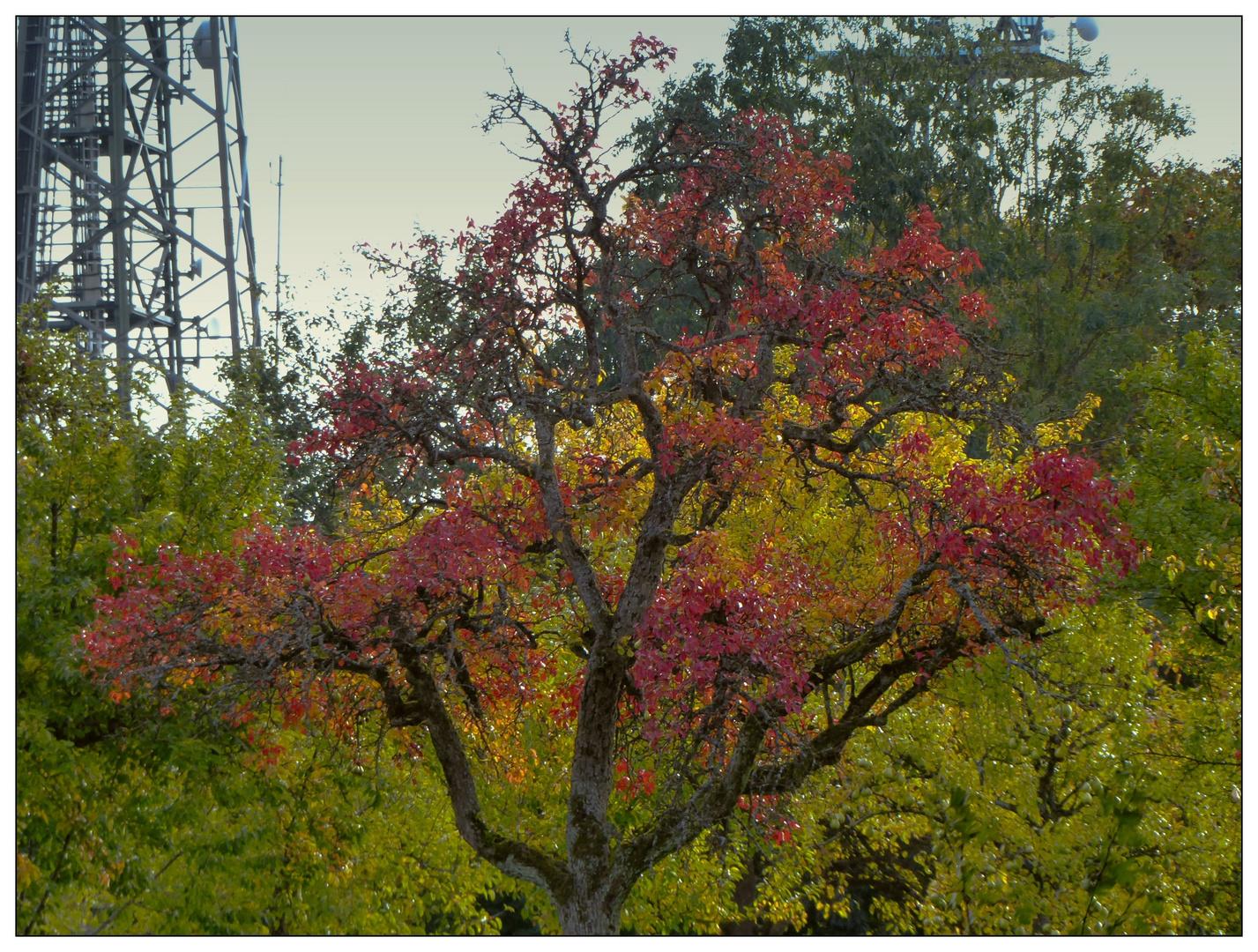 Herbstlandschaft mit Funkturm